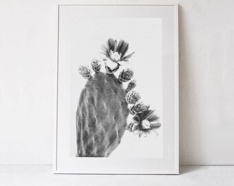 Cactus Flower PRINTABLE Photography Print, Cactus Wall Art, Cactus Photo INSTANT DOWNLOAD Printable Art Print, Succulent Art digital artwork