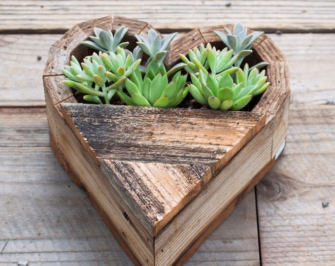 Small Succulent Heart Planter Wall Hung