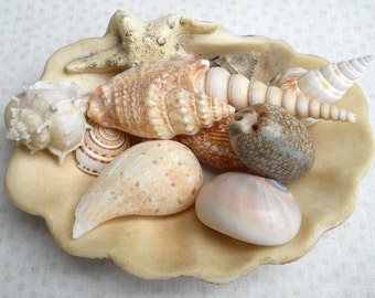 Shell Collection Vintage Gorgeous