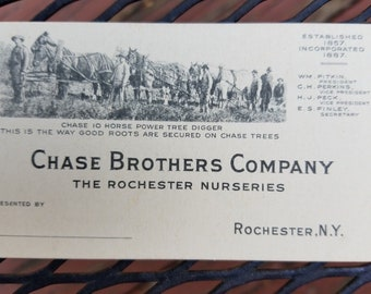 Antique Chase Brothers Company The Rochester Nurseries Business Card