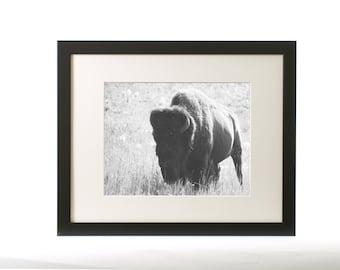 Wildlife Photograph - Buffalo