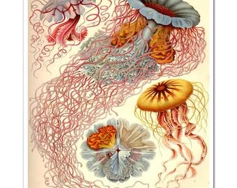 Jellyfish Art Print by Ernst Haeckel, Poster, Art Nouveau Print, Beach Decor, Coastal Wall Art, Sea Life Art, Coastal Decor