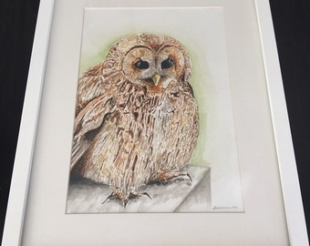 Original Watercolour ~ Tawny Owl ~ Framed