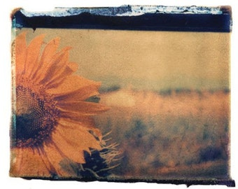 Sunflower Art Photography Polaroid Print 11x14 inches matted in 16x20 inches