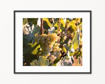 Sunset Grapes Print. Fingerlakes Wine Region. Keuka, New York. Grapevine Photo. Riesling. Wine Grapes Art. Home Decor.