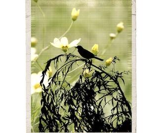 Bird Art Fine Art Photograph Willow Song Nature Robin Green Tree Silhouette Yellow Flower