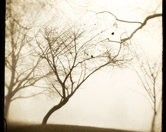 Sepia Trees Crows Photograph--Reaching Trees with Crows--TTV Fine Art