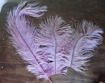 Large Vintage Millinery Feathers, 3 Lavender-Mauve Hat feathers, 8 to 13 inches long, Antique 1900s Plumes