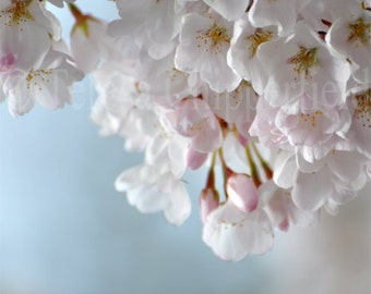 Spring Blossoms, Fine Art Photography, Spring Flowers Soft Gentle Floral Photo Print , White Pink Dreamy Translucent Garden,8x10,11x14,16x20