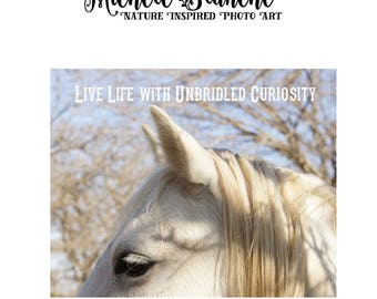 Horse Lover Typography Photo, Horse Inspirational Quote, Curiosity Saying, Horse love photo typography,