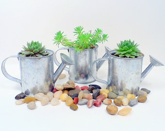 6 Succulent Watering Can Favors, Wedding, Baby Shower, Garden Party Favor