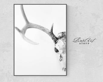 Deer Skull Antlers Poster, Animal Antlers Print, Scandinavian Prints, Antique Skull Anatomy, Skull Biology Art Print, Modern Minimal, Arte
