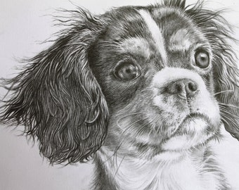 King Charles Cavalier Spaniel - Original Pencil Drawing - Dog Portrait - Animal Lover - Fine Art