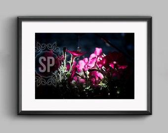 Petunia fine art photographic print. 20 x 30 cm.