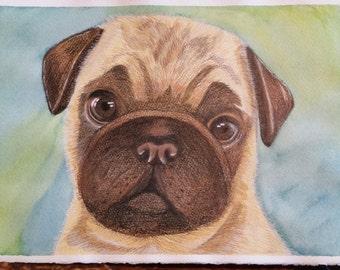 Watercolor and pencil pug print