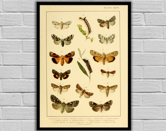 Vintage Moths and Caterpillars Print/Canvas - Antique Moth & Caterpillars Print - Lepidoptera Decor - Butterfly and Moth Wall Art - 250