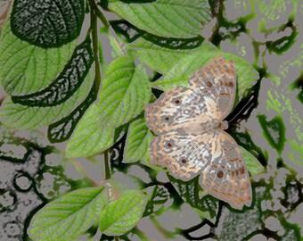 Butterfly on Flower 6, Child's Photo, 5x7 Photo, 8x10 Photo, 11x14 Photo, Child's Decor