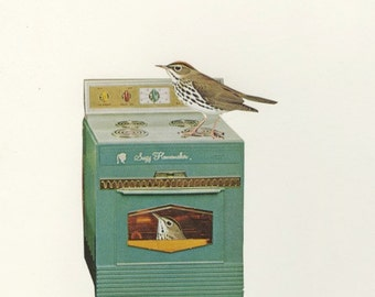 Ovenbirds in their natural habitat.  Collage print by Vivienne Strauss.