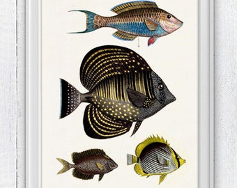 Naif  fishes - Wall decor poster ,  Sea fish collage- sea life print-Marine  sea life illustration A4 print SAS039