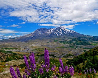 Mount Saint Helens with Lupines