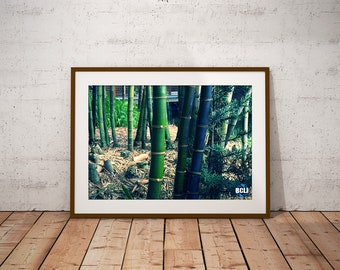 Bamboo Forest - nature photography, landscape photography, bamboo, forest