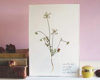 Queen Anne lace print - White flower print - Botanical print - White floral print - Floral illustration