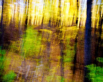 Streaks of Fall Abstract Color