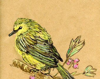 Original Drawing - Warbler - Bird Art in Charcoal, Chalk Pastel & Ink