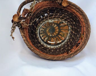 Ammonite in Rust and Brown