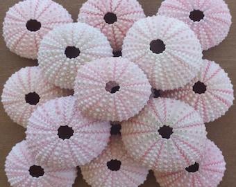 Beach Decor, 10 Sea Urchins, Pink Sea Urchins, Beach Decor, Sea Urchins, Craft Shells, Seashells, Shells