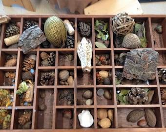 20/50 Item Nature Curiosity Collection Grab Bag - Seed Pod & Mineral Specimen - curio shelf natural curiosity cabinet oddity biology study