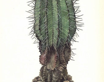 Cactus Print,  Botanical Print, Art Print, Home Decor, Book Plate, Illustration, Wall Decor, Euphorbia horrida, Green, A-14