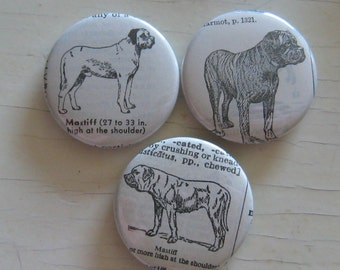 Mastiff Vintage Dictionary Illustration Magnet Set of 3