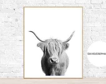Highland Cow Print, Black and White, Highland Bull Print, Animal Photo, Farm Wall Art, Cattle Photography, Nursery Poster, Living Room Print