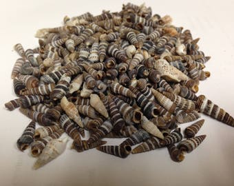 Rhinoclavis Auger Seashells (Approx.  1/2 pound Bag)  (EA)