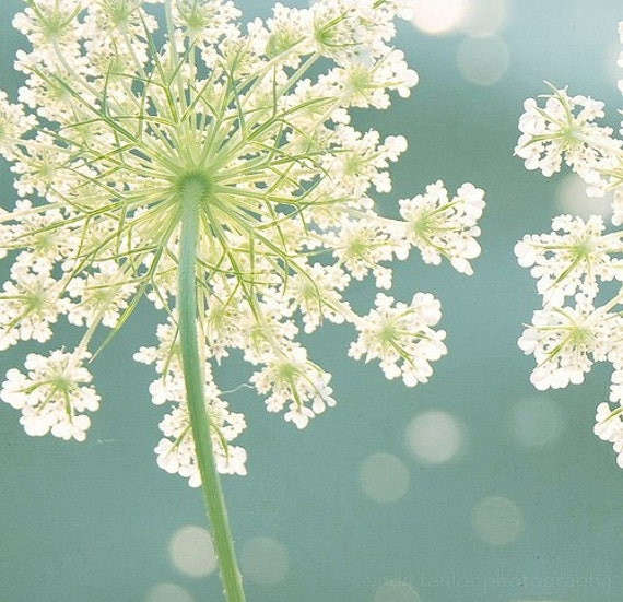 """Nature Photography, Fine Art Photography, Flower,Teal, Turquoise, Ivory, Lime, Print,""""Summer Meadow"""""""