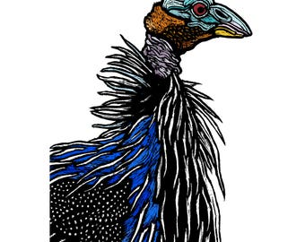 Wall Art, Giclee Signed Art Print - A4 - Vulturine Guineafowl Protrait