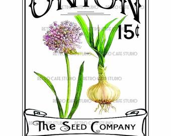 Vintage Illustration Onion Seed Packet Digital Download Vegetable Transfer Clip Art