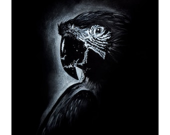 A3 Limited Edition Black and White Macaw Fine Art Print