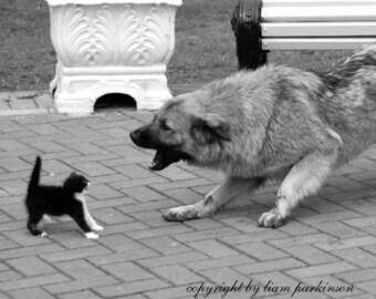Big Bully - Original Signed Fine Art Photograph