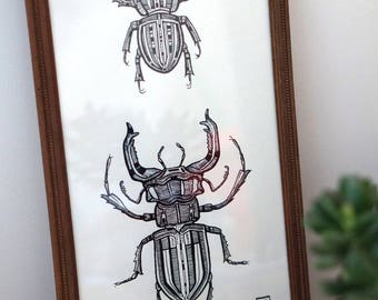 Framed illustration of two beetles ink