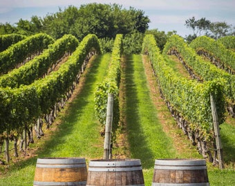 Vineyard View on Long Island's North Fork