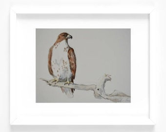 Original 8x10 Watercolor Painting - Red Tailed Hawk