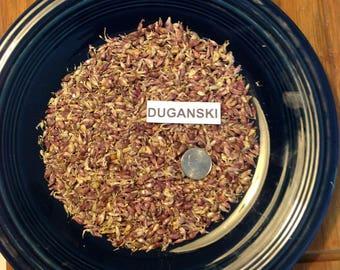 100+ DUGANSKI Garlic Bulbils/seeds - Hardneck - Standard Purple Stripe type   Organically Grown