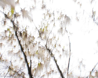 Magnolia tree photography  botanical photography  Under the STAR Magnolia // photography  / wall art / blurred