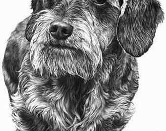 Dachshund (Wire Haired) , Fine Art Print by Mike Sibley