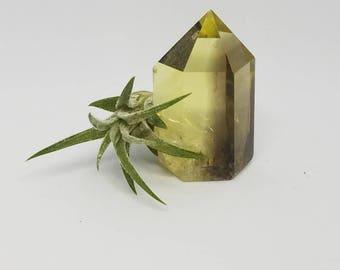 Air Plant Crystal | Tillandsia | Crystal Garden | Air Plant Gift | Natural Crystal | Airplant Crystal | Healing Crystals | Smokey Quartz