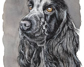 ENGLISH COCKER SPANIEL - beautiful original ink-and-wash portrait, perfect gifts for dog lovers by Yorkshire artist Jess Chappell