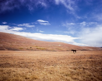 Lone Horse on the Plains, Western Photography, Horse Photography, Cowboy Photo, Wyoming Photography, Wild West Gift, End of the Trail, Blue