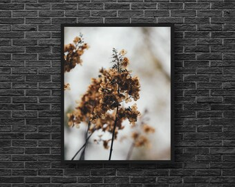 Sepia Photo - Dried Plant - Vintage Photo Print - Botanical Photo - Vertical - Paper Photo Print - Botanical Wall Art - Botanical Wall Decor